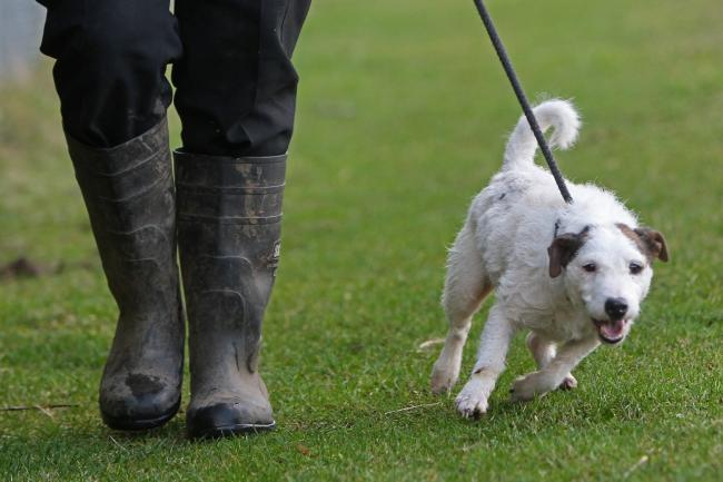 ON A LEAD: A plea to dog walkers in Somerset