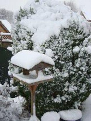 EXPRESS website viewer Sherri Matthews sent us this photo of her garden on the Abbey Manor Park estate in Yeovil following the recent snow.