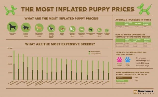 Yeovil Express: The most inflated puppy prices. (Benchmark Kennels)
