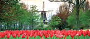 Yeovil Express: Dutch Bulb Fields