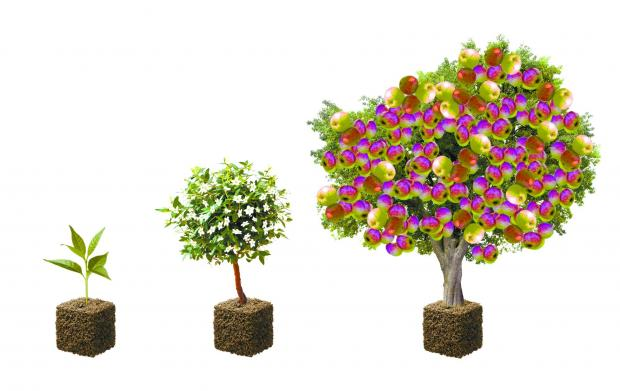 Yeovil Express: THE progression of the special trees, from sapling to maturity in six months