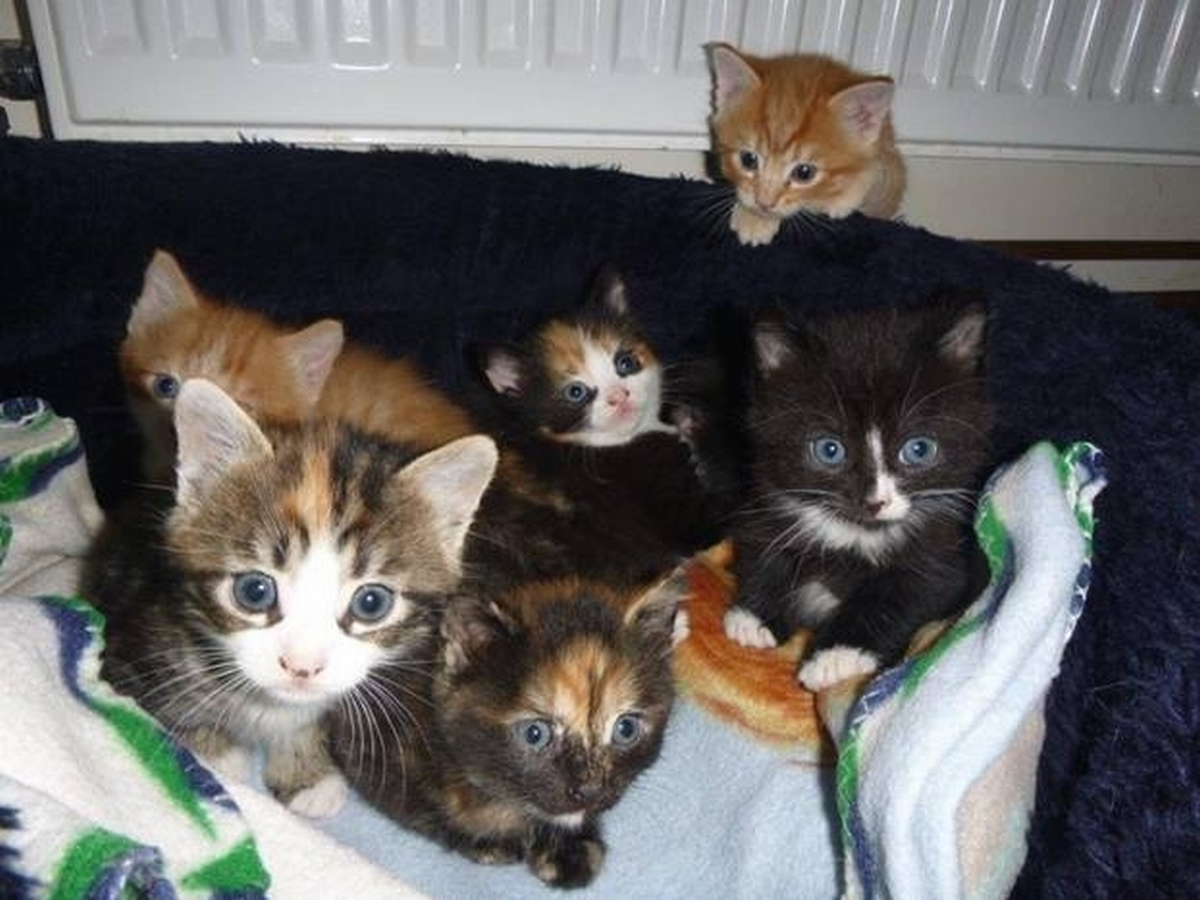 Nine kittens dumped at Ferne Animal