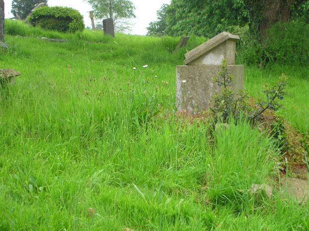 Yeovil Express: Ilminster Cemetery overgrown and disrespectful, residents claim