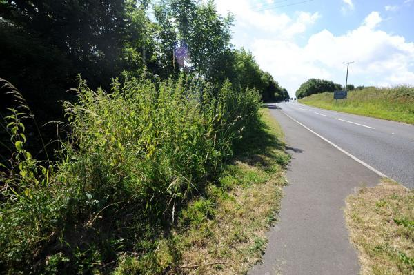 Grass verges in Ilton a danger to motorists, it is claimed